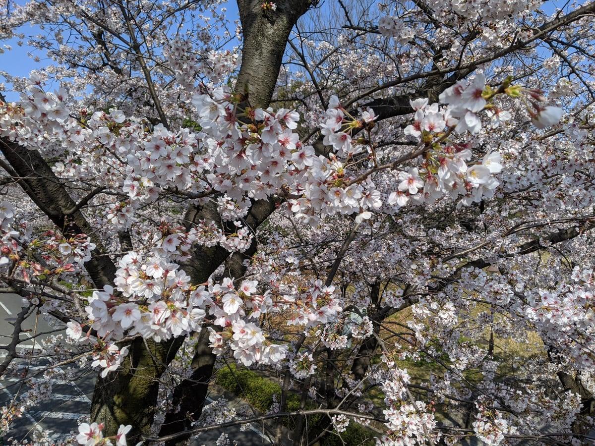 4枚目の桜の画像