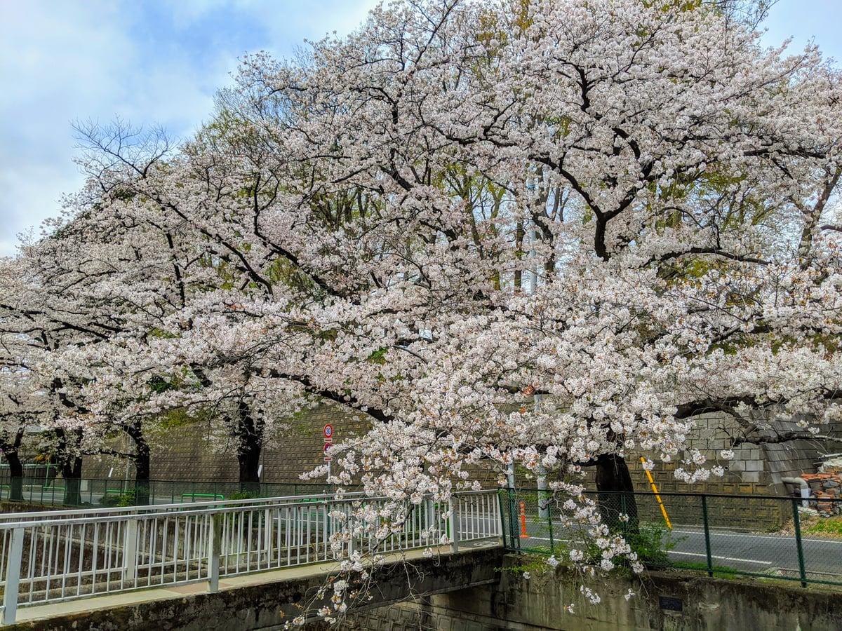 6枚目の桜の画像