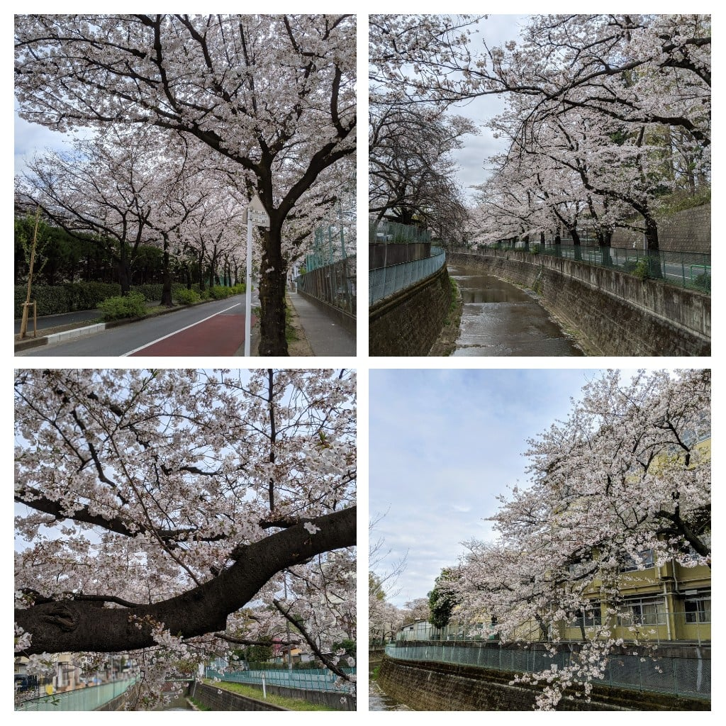 7枚目の桜の画像